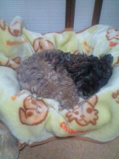 犬用ベッド出しました(冬用)