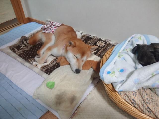 寝てる写真ばっかで、ゴメンなさい