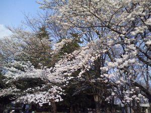 Photo_016_5